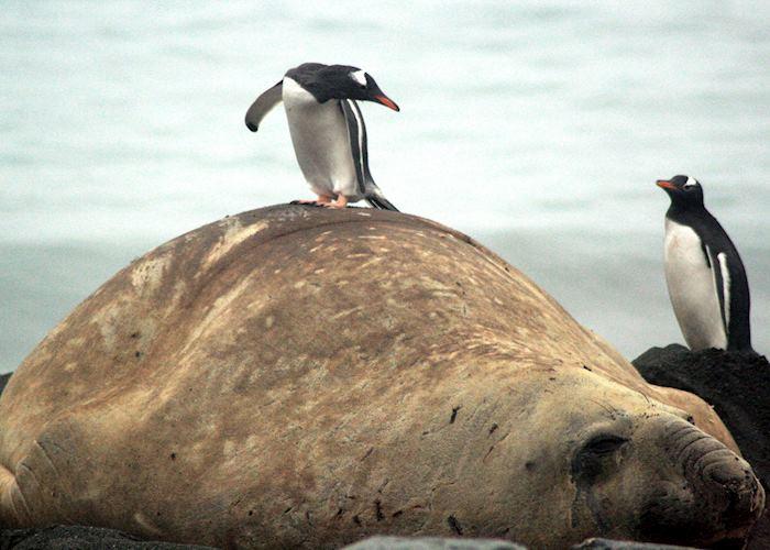South Georgia, Antarctica