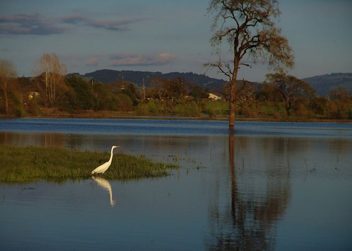 The Laguna de Santa Rosa, Sonoma County