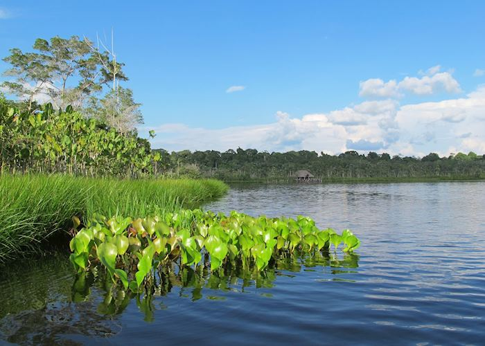 Lake Pilchicocha at Sacha Lodge