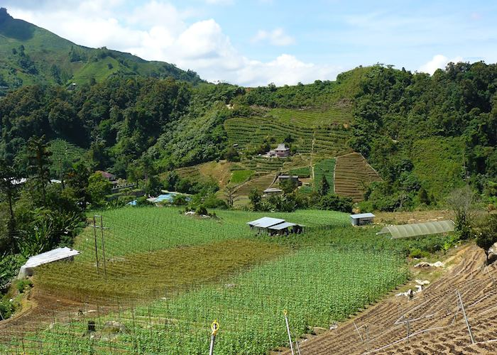Farm scenery in the Cameron Highlands, Malaysia