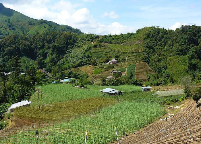 Farm scenery in the Cameron Highlands, Malaysia