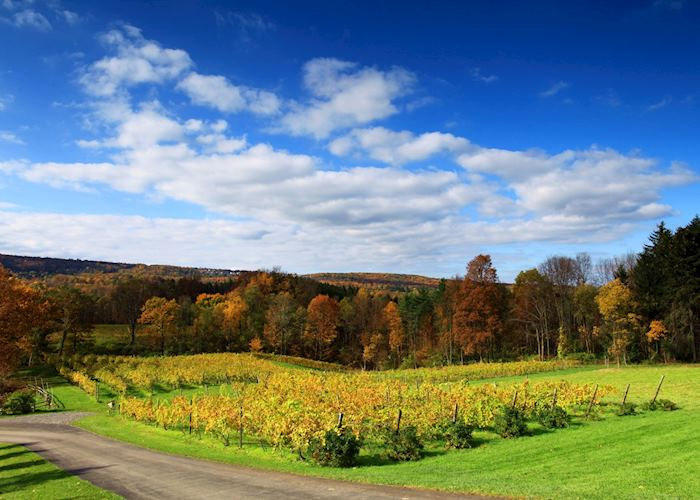 Vineyards near Ithaca, New York State