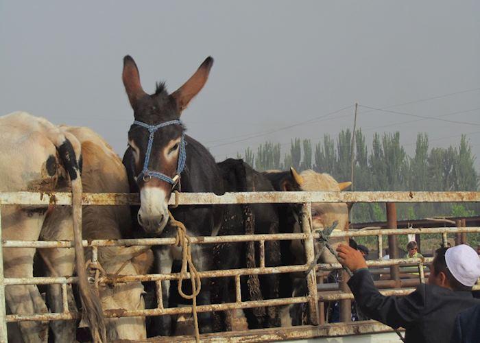 Kashgar Sunday Market, Kashgar