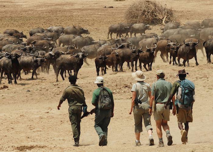 Walking Safari from Chikoko Bushcamp,South Luangwa National Park