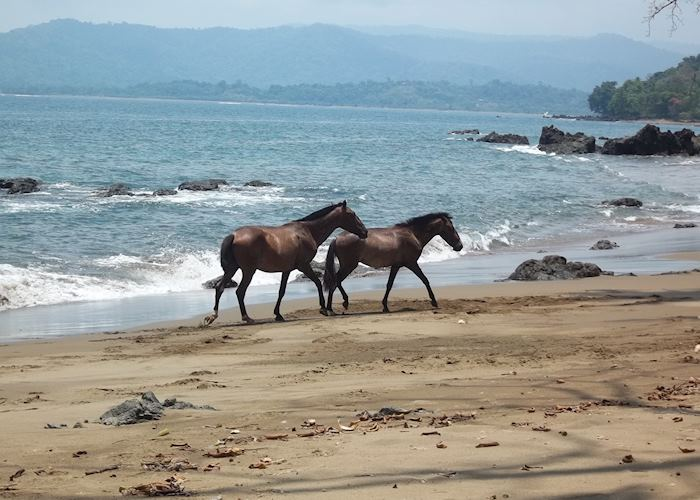 Wild horses, Copa de Arbol Beach & Rainforest Resort,Copa de Arbol