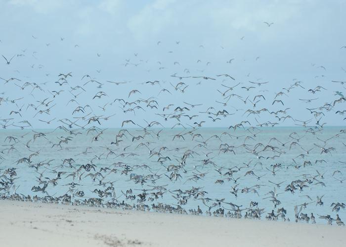 Prolific birdlife on Fanjove Island, Songo Songo Archipelago
