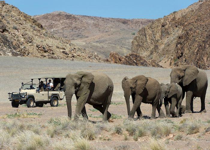 Desert elephant in Damaraland, Namibia