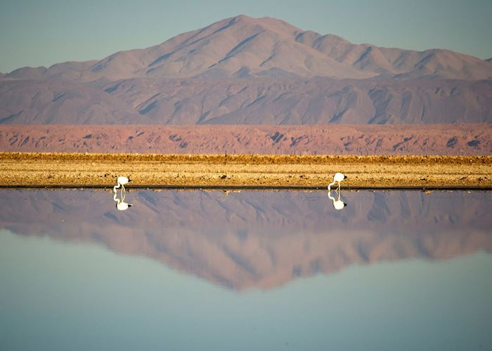 Altiplanic Lagoons, Atacama