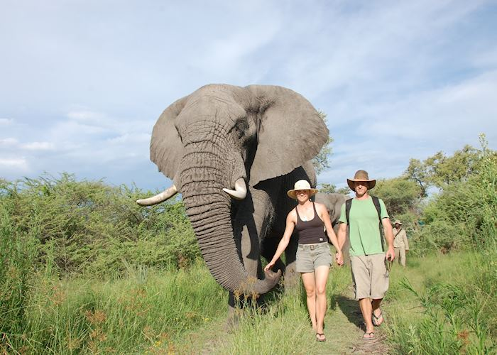 Elephant experience from Stanley's Camp