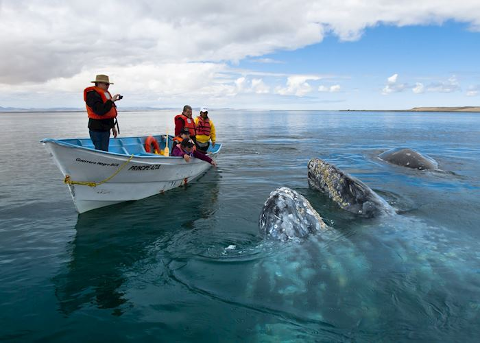 Whale watching, Cradle of the Grey Whale, Baja California