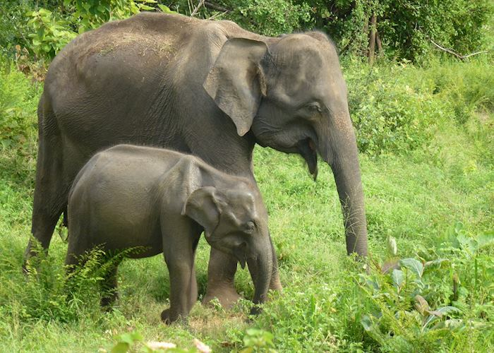 Mother and baby elephants in the wild