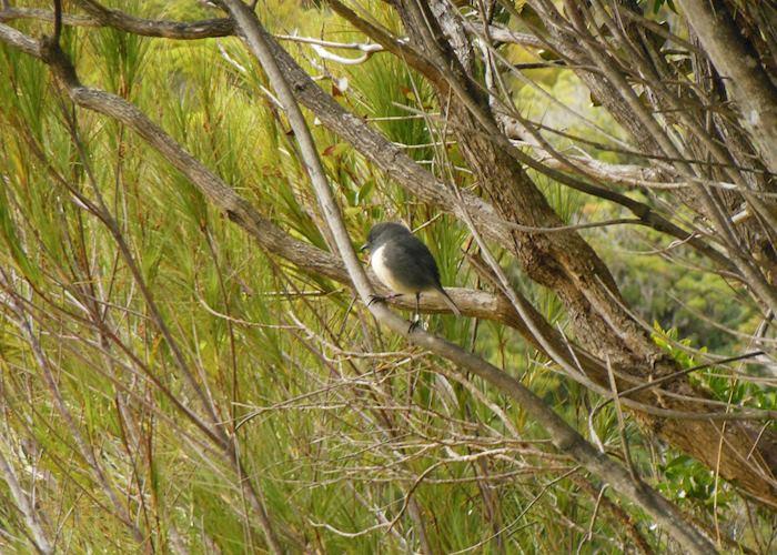 Birding Bonanza and Kiwi Spotting full day tour of Ulva and Stewart Islands, Stewart Island