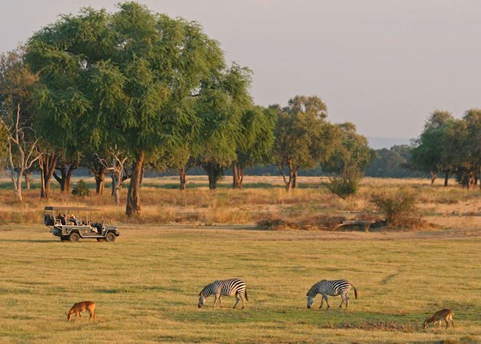 Game drive in the South Luangwa National Park, Zambia