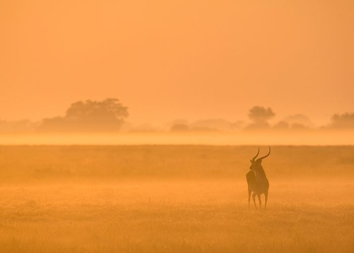 Puku in the mist, Kafue national park