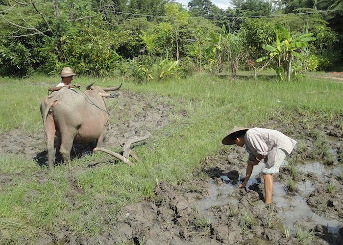Workers at the Living Land Rice Experience, Luang Prabang
