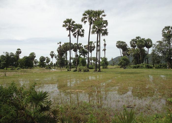 Countryside views, Siem Reap