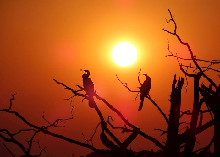 Birds at Sunset, Chobe National Park