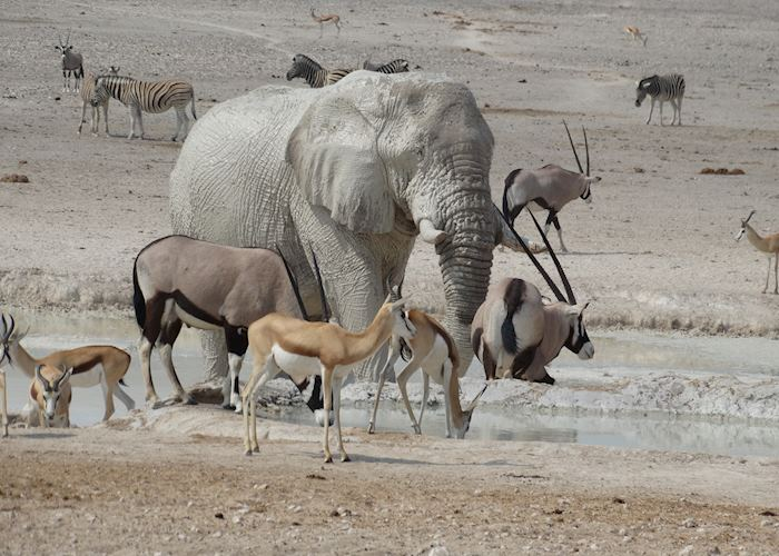 A typical waterhole scene, Etosha National Park