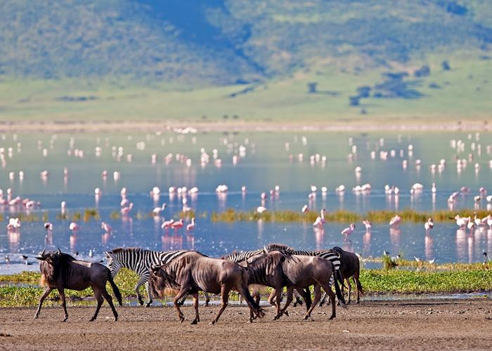 Wildebeest, zebra and flamingos in the Ngorongoro Crater