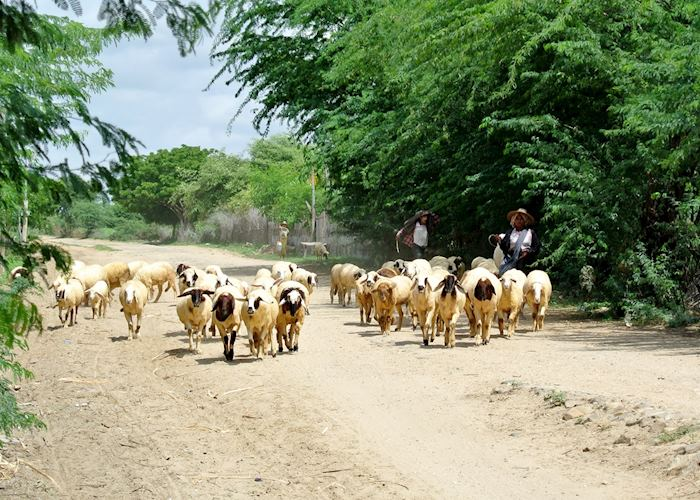 Shepherd's on the move, Bagan, Burma (Myanmar)