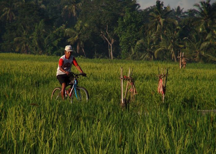 Cycling through rice terraces, Ubud