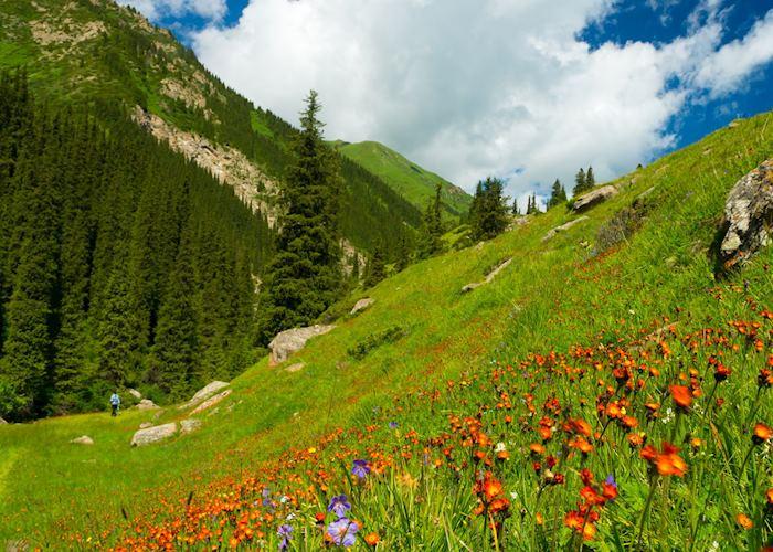 Altyn Arashan flower meadow, Karakol