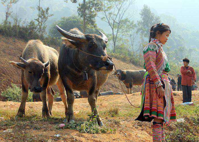 Hmong girl with Water buffalo, Coc Ly Market, Bac Ha