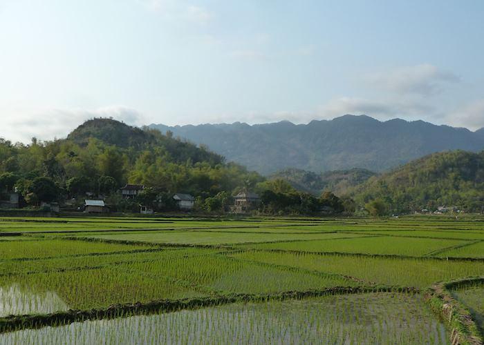 Mai Chau, rice paddies