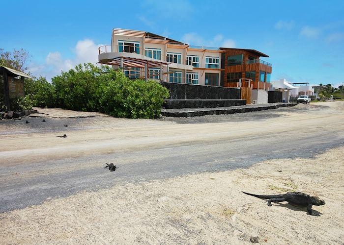 Iguana Crossing, Galapagos Islands