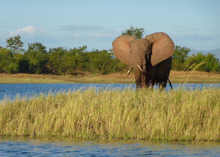 Elephant at Lake Kariba, Zimbabwe