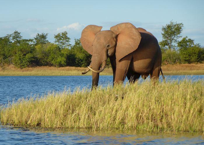 Getting close to an elephant by boat on Lake Kariba, Zimbabwe