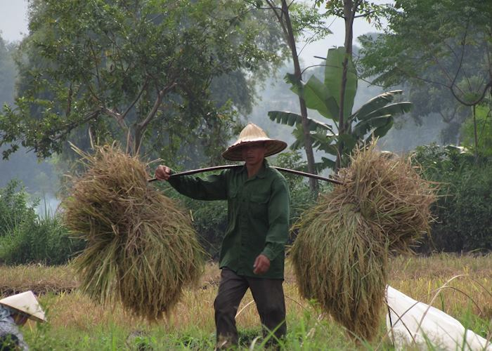 Farmer in the rice fields