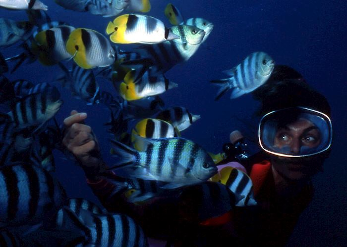 Butterfly fish, Huahine