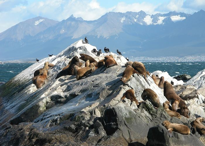 Sea lions, Beagle Channel, Ushuaia