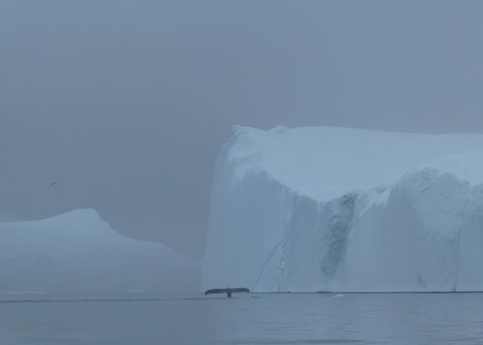 Icebergs looming out of the mist, Greenland
