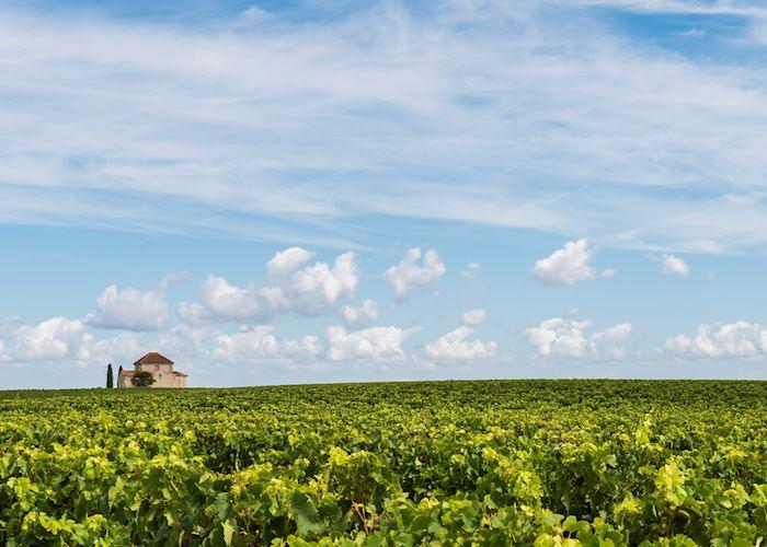 Médoc wine region, France