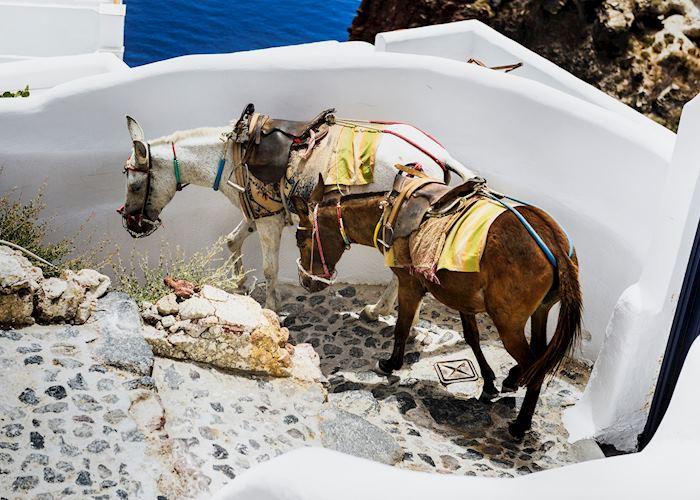 Mules on the path, Oia