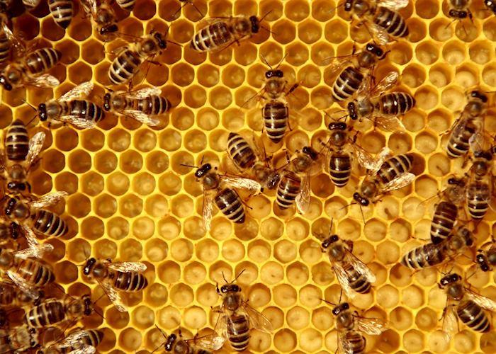 Beehive, Greece
