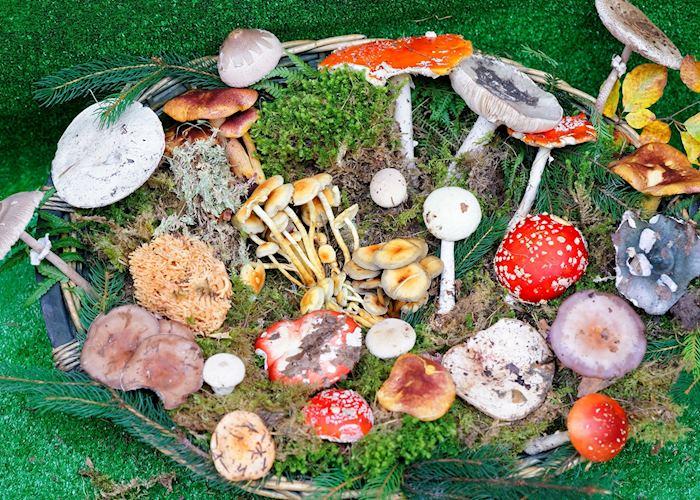 Display of mushroom species, Greece