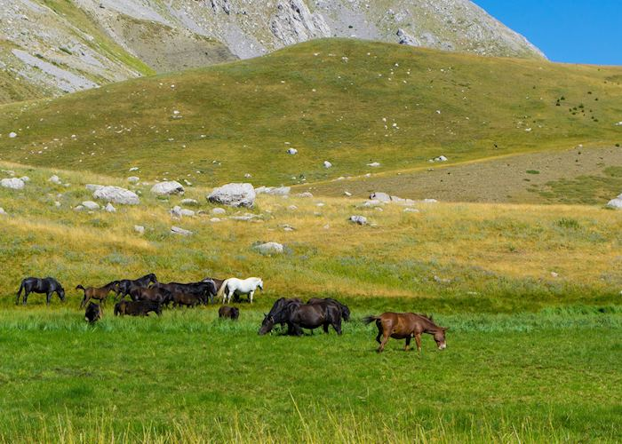 Horses in the Pindus Mountains, Greece