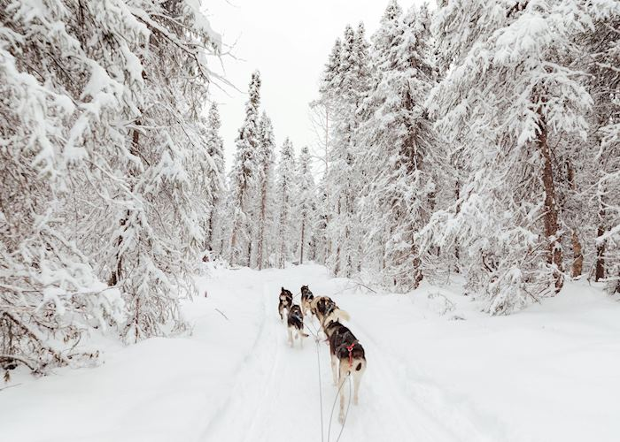 Full Day Dog Sledding Experience, Anchorage