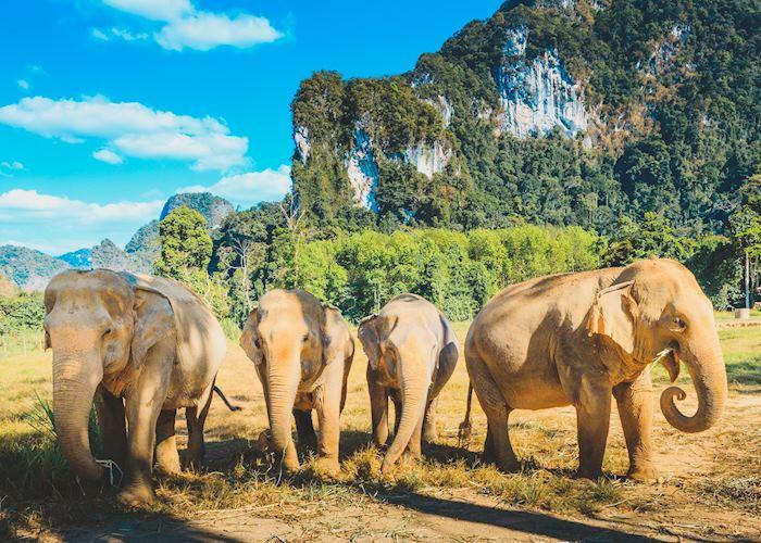 Elephant Hills Camp- Khao Sok