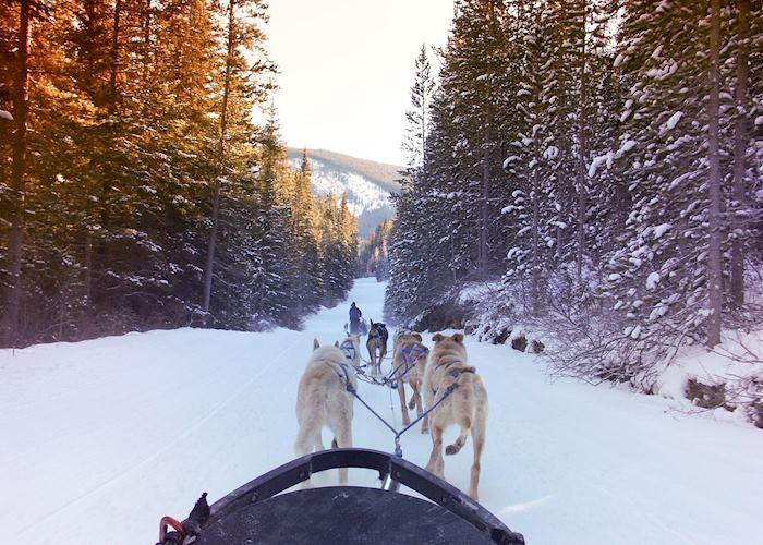 Dog-sledding and Mushing Experience, Jasper