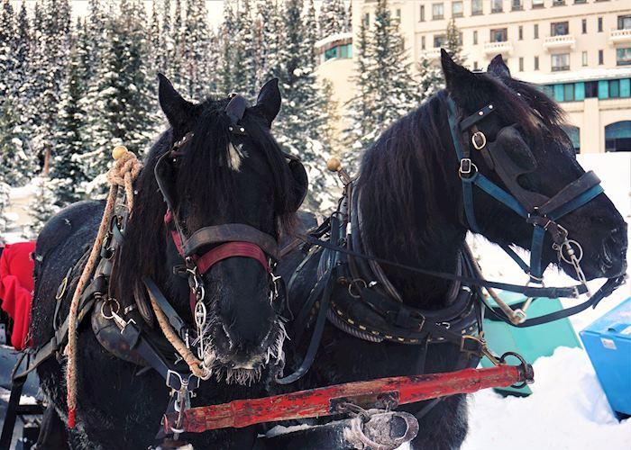 Horse-drawn sleigh, Lake Louise