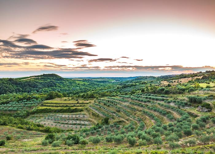 Terraced hills, Istria