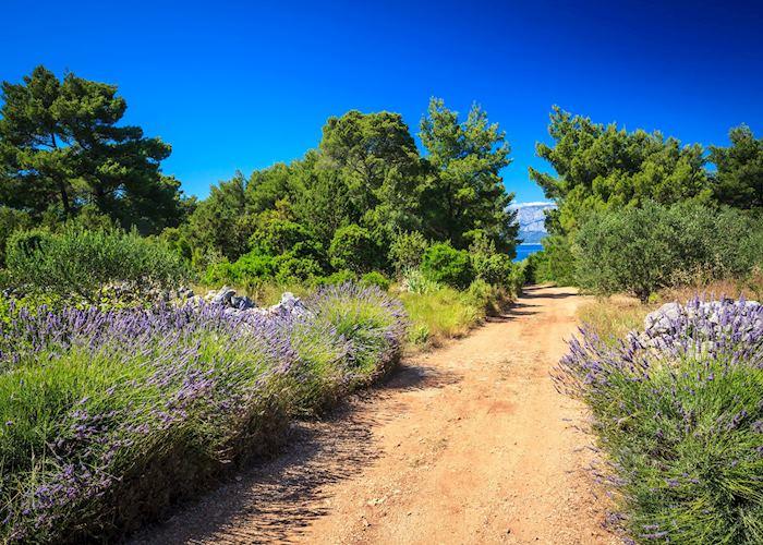 Trails of lavendar, Hvar