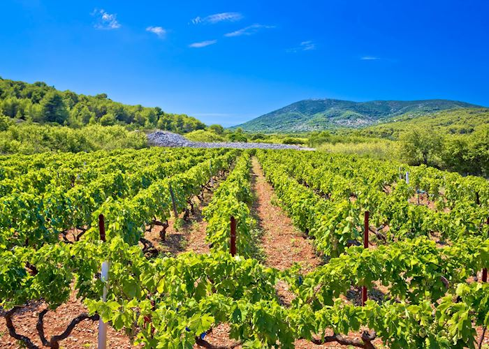 Vineyards of Vis, Croatia