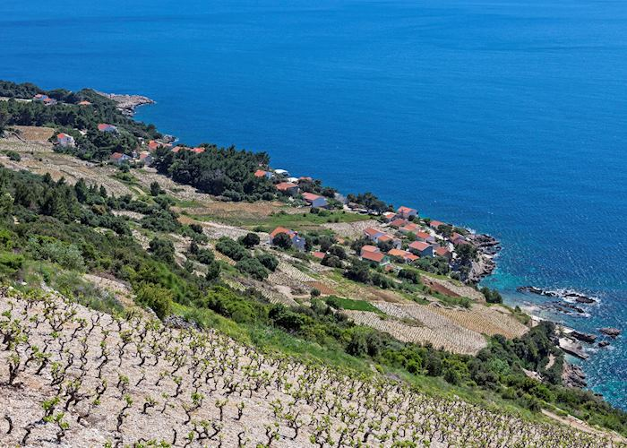 Rocky hillside vineyard, Peljesac Peninsula