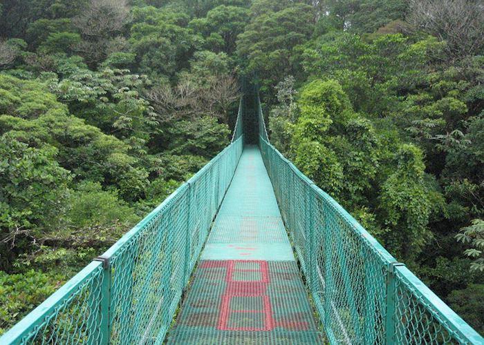 Canopy walkway at Selvatura