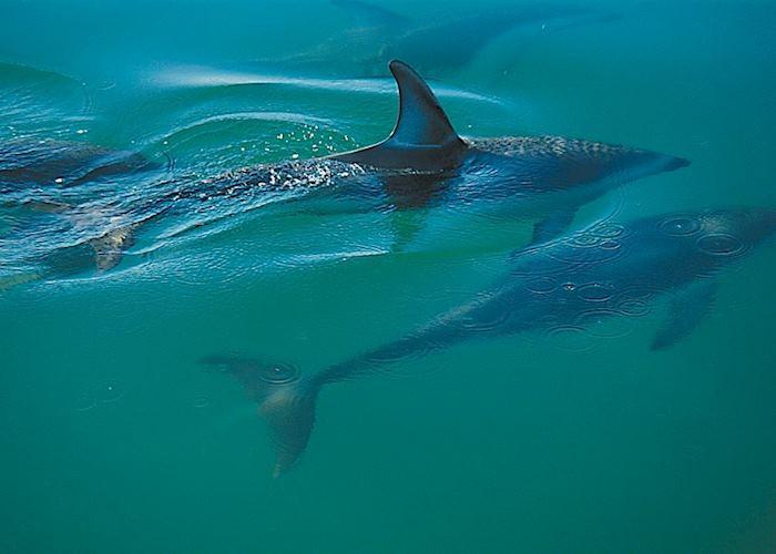 Dolphins, Abel Tasman National Park